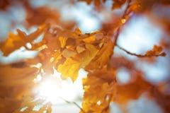 Feixes de Sun através das folhas Foto de Stock
