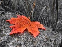 Fejka det orange bladet Arkivbild