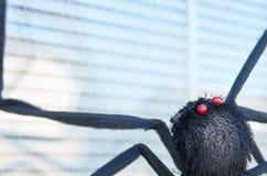 Fejka svart spindelgarnering för allhelgonaaftonen på fönster Royaltyfri Bild