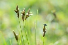 Fel för grönt gräs Royaltyfria Foton