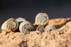Fel förfogande av batterier Royaltyfri Fotografi