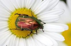Fel på blomman Royaltyfria Bilder