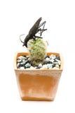 Fel på en kaktus Royaltyfria Bilder