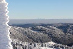 黑色felberg森林德国山顶 库存图片
