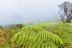 FELCE AQUILINA in throu principale della traccia di Kew Mae Pan Nature Trail Trekking immagini stock