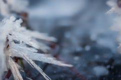 Felce del ghiaccio Fotografia Stock Libera da Diritti