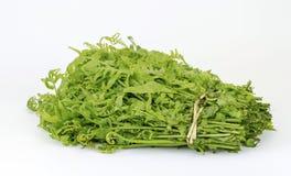 Felce della verdura fresca Immagini Stock
