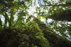 Felce di albero 03 Immagini Stock
