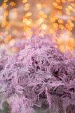 Felce di asparago asciutta di colore rosa Utilizzato nella progettazione floreale per la decorazione delle disposizioni e dei maz immagini stock libere da diritti