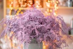Felce di asparago asciutta di colore rosa Utilizzato nella progettazione floreale per la decorazione delle disposizioni e dei maz fotografia stock