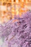 Felce di asparago asciutta di colore rosa Utilizzato nella progettazione floreale per la decorazione delle disposizioni e dei maz fotografia stock libera da diritti
