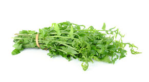 Felce di verdure isolata su fondo bianco Immagine Stock Libera da Diritti