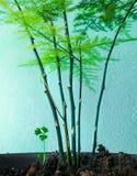 Felce e prezzemolo di asparago Immagine Stock