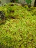 Felce verde immagine stock