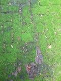 Felce verde sul passaggio pedonale Fotografia Stock Libera da Diritti