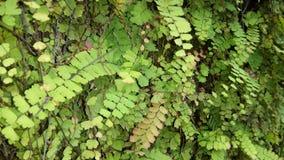 Felce verde sulla parete immagine stock