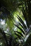 Felci della giungla Immagini Stock Libere da Diritti
