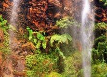 Felci e cascata tropicale Fotografie Stock