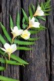 Felci e fiori strutturati Fotografia Stock Libera da Diritti