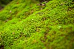 Felci e muschio di albero sulle rocce chiuda su, la Tailandia fotografia stock libera da diritti