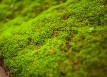 Felci e muschio di albero sulle rocce chiuda su, la Tailandia immagini stock