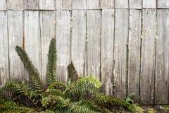 Felci e vecchia cabina di legno Immagini Stock Libere da Diritti