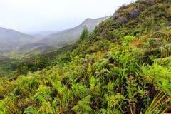 Felci ed altre piante nelle montagne su una mattina nebbiosa in Af Fotografia Stock