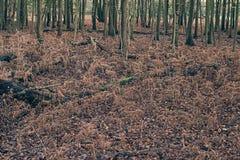 Felci morte nella foresta di autunno Immagini Stock Libere da Diritti