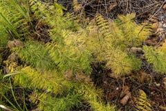Felci multicolori nella foresta di autunno Fotografie Stock Libere da Diritti