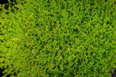 Felci tropicali esotiche con profondità di campo bassa Fotografia Stock