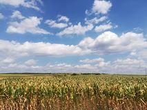 Feld Stockbild