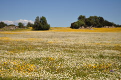 Feld in Alentejo Lizenzfreies Stockfoto