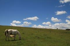 Feld in Argentinien Lizenzfreies Stockbild