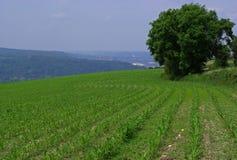 Feld auf einem Hügel Lizenzfreie Stockbilder