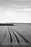 Feld auf Schwarzweiss Stockbild