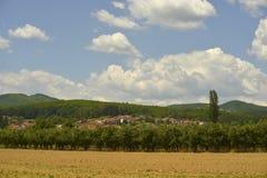 Feld auf Sommer Stockfoto