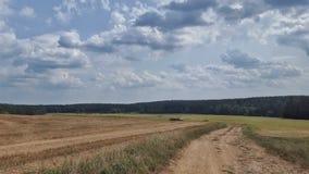 Feld auf Sommer Lizenzfreies Stockbild