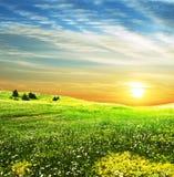 Feld auf Sonnenuntergang Stockfotografie