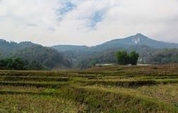 Feld aus Jahreszeit im chiangmai heraus Stockfotos