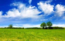 Feld, Bäume und blauer Himmel Stockbild