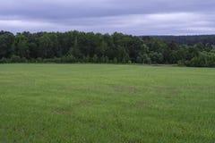 Feld, Bäume und der bewölkte Himmel Stockbilder