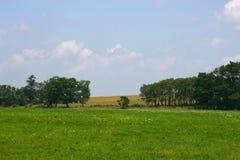Feld, Bäume und Himmel Lizenzfreie Stockbilder