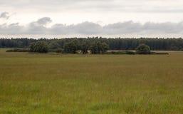 Feld, Bäume und Himmel Stockfotos