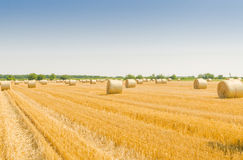 Feld with bale of straw Stock Photo