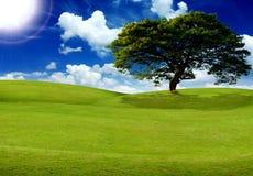 Feld, Baum, Sonne und blauer Himmel Lizenzfreie Stockfotografie