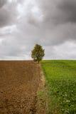 Feld, Baum und Sturm Lizenzfreie Stockfotos