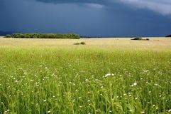 Feld befoe ein Sturm Stockfotos