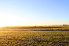 Feld bei Sonnenaufgang Stockfotografie