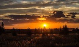 Feld bei Sonnenuntergang Stockfotografie