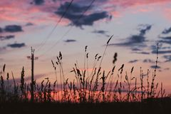 Feld bei Sonnenuntergang Lizenzfreie Stockfotos